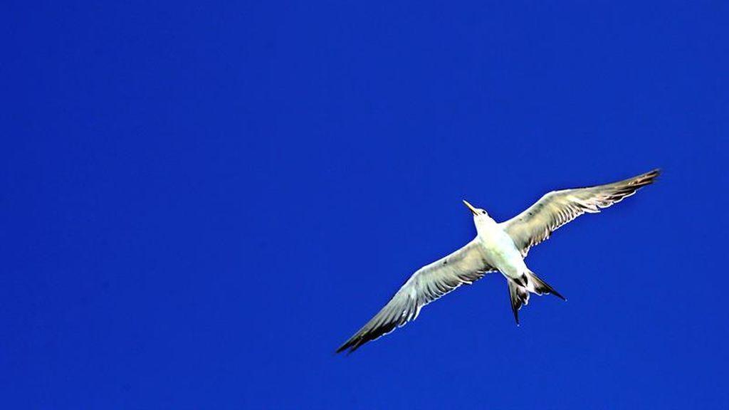 Gaviota solitaria volando el cielo de Mannar en Sri Lanka