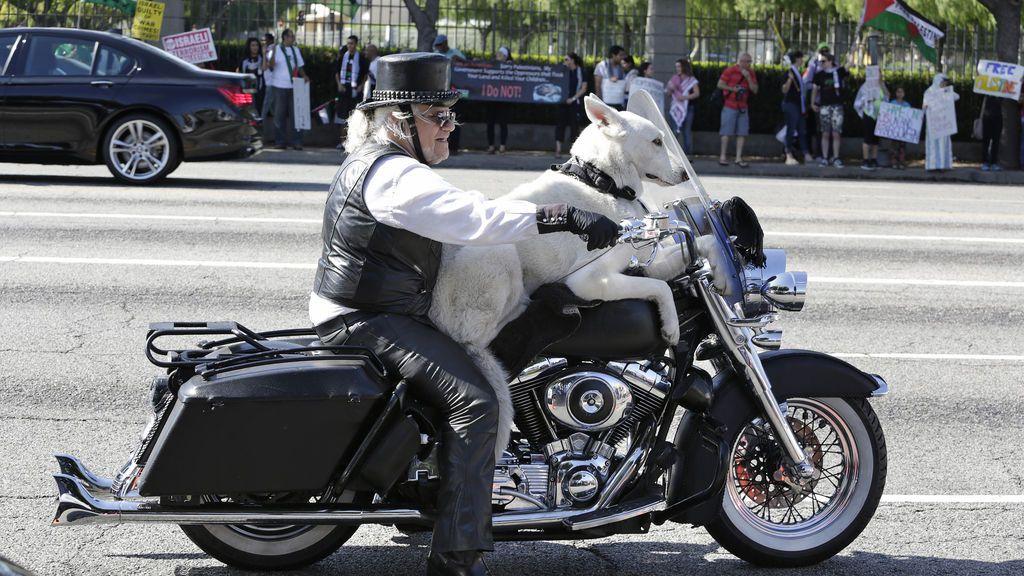 Gana el los tribunales el derecho a llevar a su perro sobre la moto