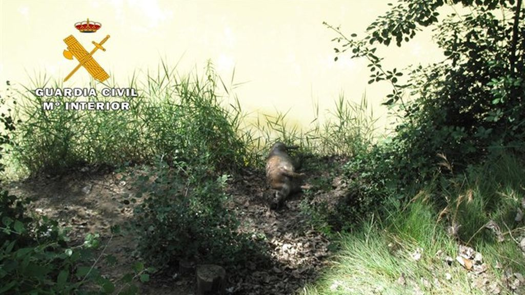 Detenido un joven en Albacete por matar a su perro y tirar su cuerpo al Júcar