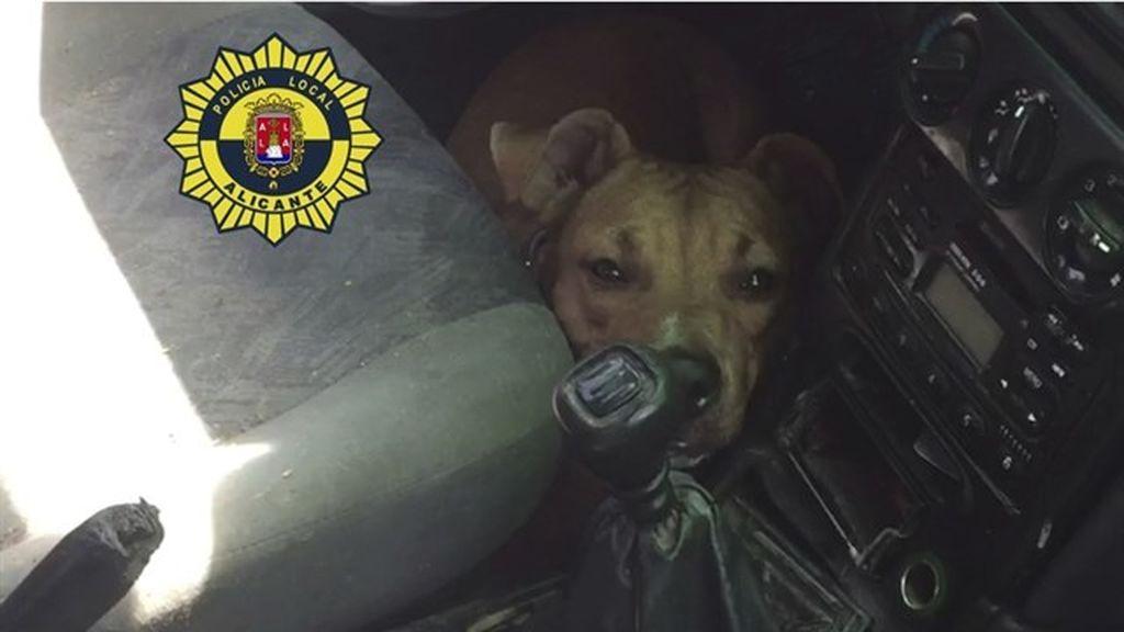 Denunciado por abandonar a su perro en un coche en Alicante a 35 grados durante horas