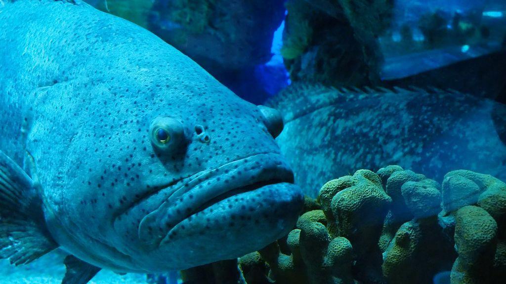 aquarium-2144947_1920