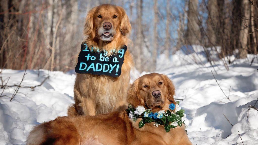 Las tiernas imágenes de unos perritos antes de convertirse en 'padres'