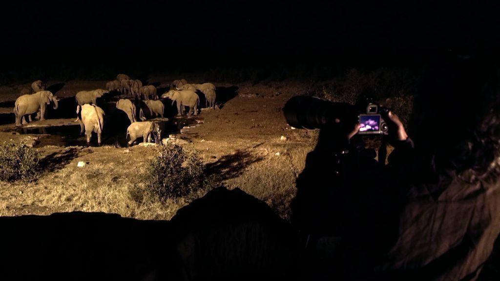 """Unai, emocionado ante una manada de elefantes: """"¡Esto es maravilloso!"""""""