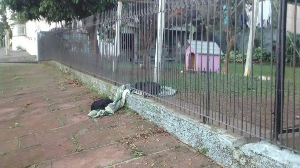 La lección de generosidad de un cachorro, cautiva las redes sociales
