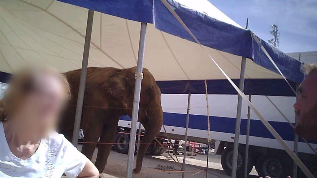 Javi denuncia el uso de animales salvajes en circos con el lamentable caso de Dumba