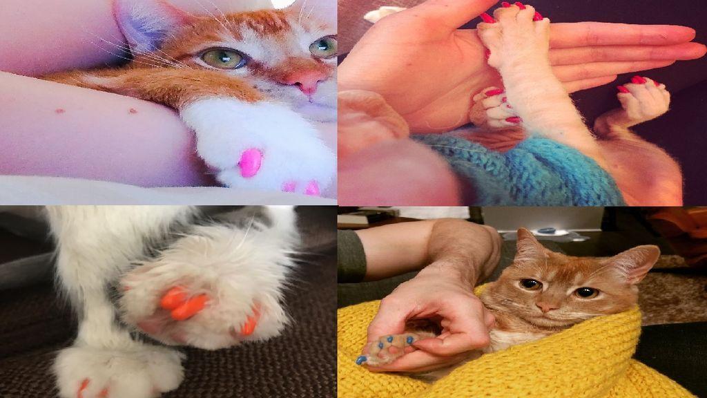 Manicura en los gatos: la  peligrosa moda de la que advierten los veterinarios