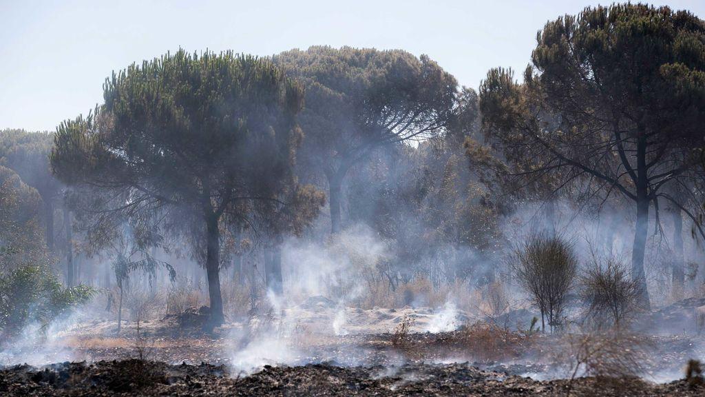 El fuego ha arrasado casi 56.000 hectáreas en lo que va de año, el peor desde 2012