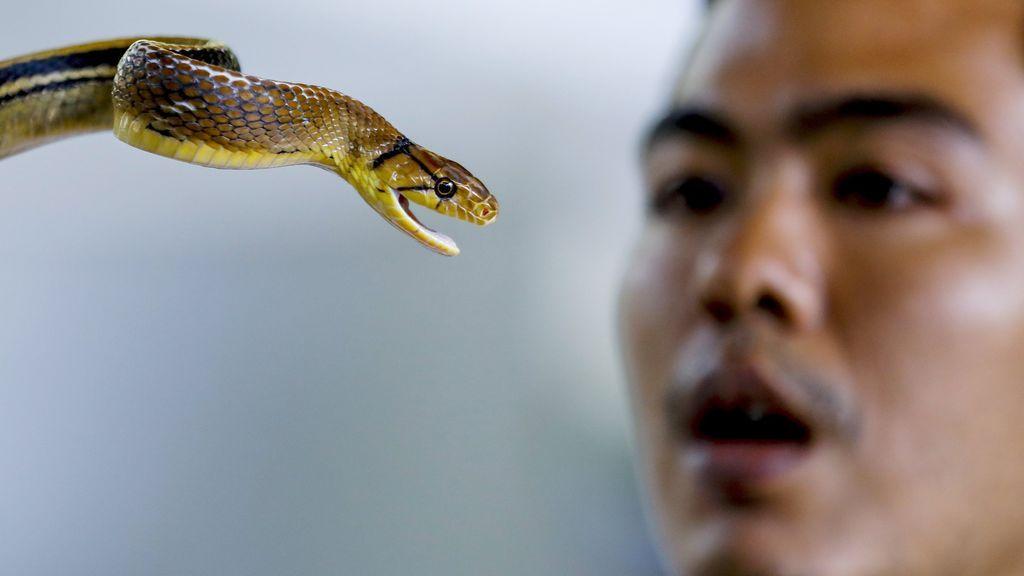 Granja de serpientes en Bangkok