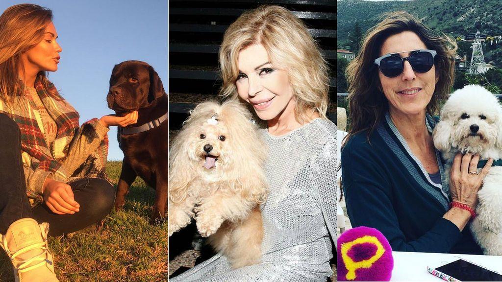 ¡Celebramos el día del perro! Os presentamos a las mascotas más 'celebrities' de nuestros famosos Mediaset