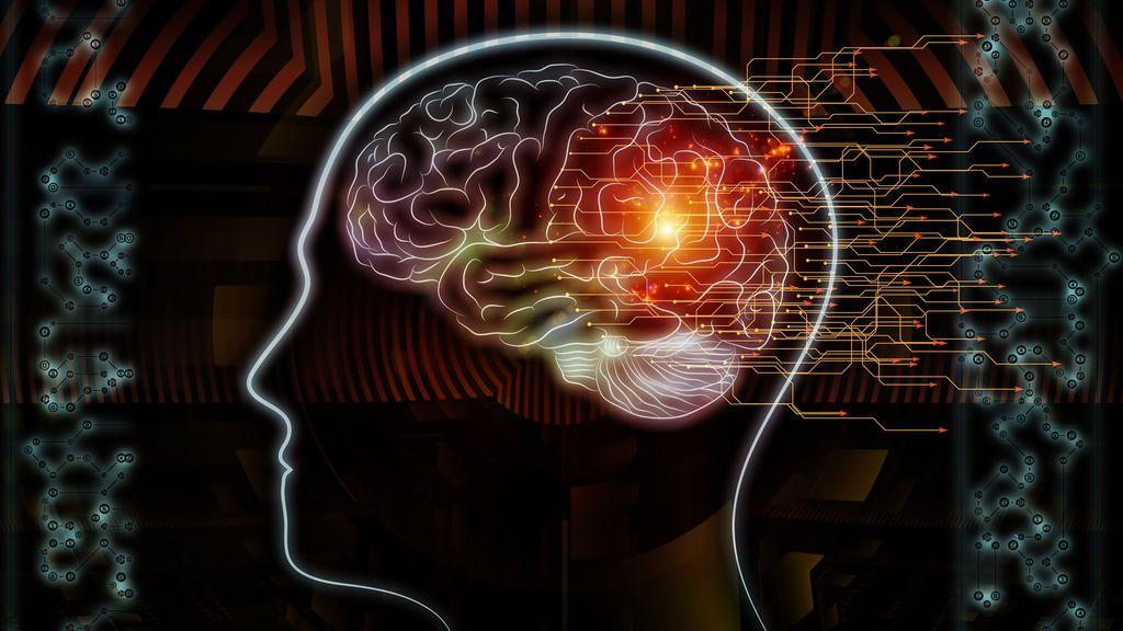 Cerebro humano metáfora