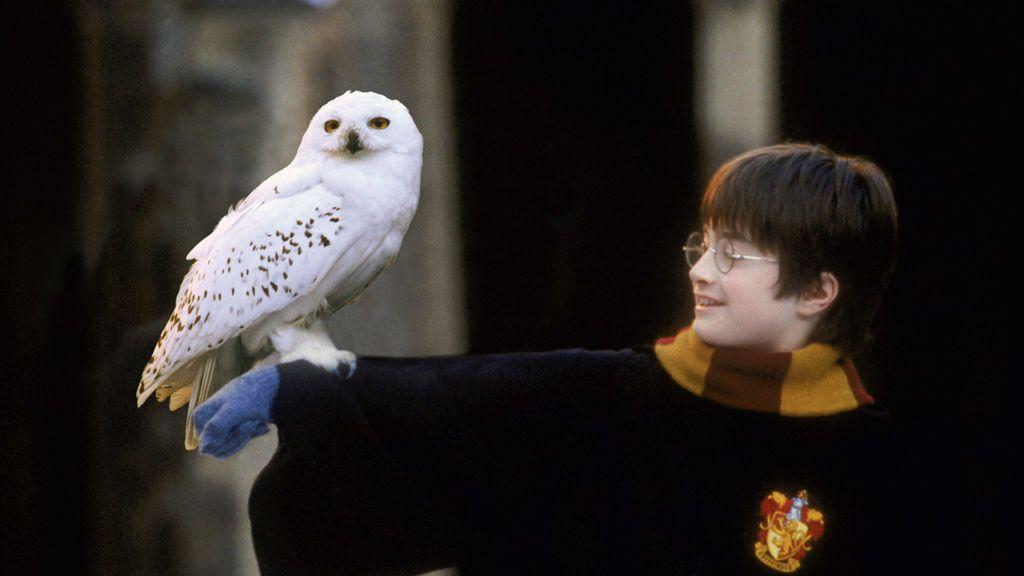 Los búhos, en peligro por los fans de Harry Potter