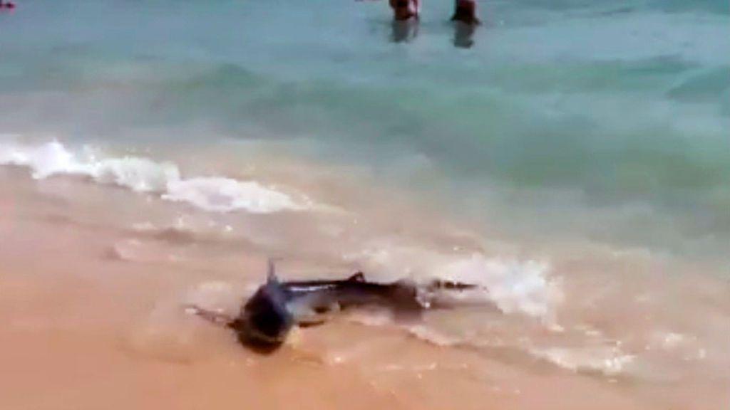 Un herido leve por rozarse con un tiburón en una playa de Mallorca