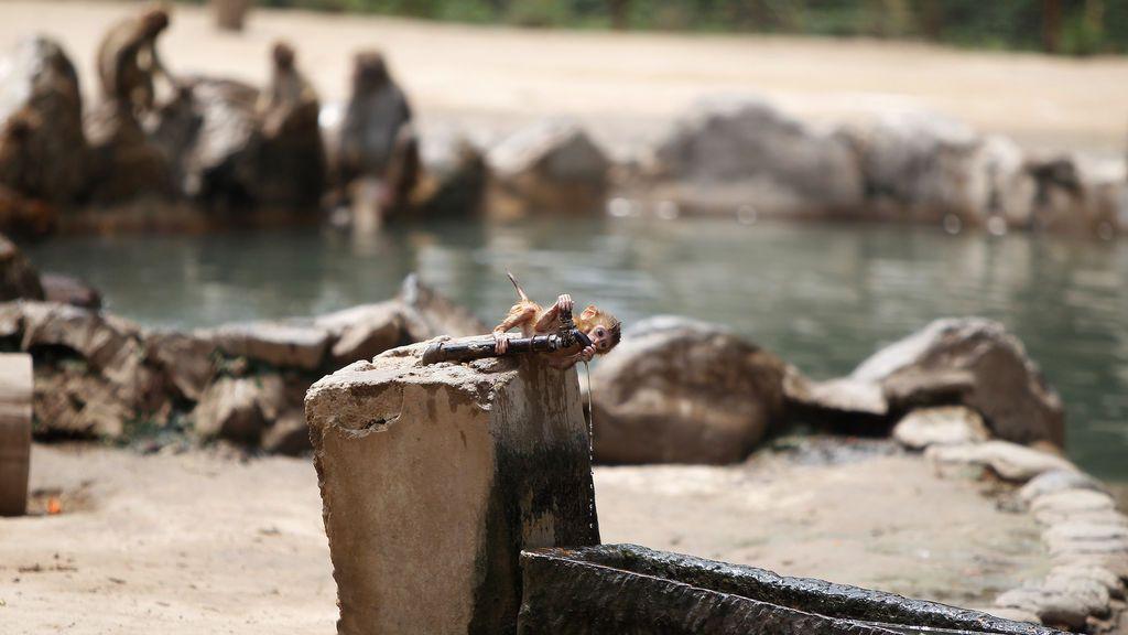Caluroso día en el zoológico en Zhengzhou, China