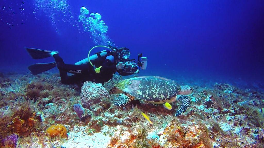 ¡Nada se les resiste! Fotografían a las tortugas marinas... ¡Y bucean con un tiburón!