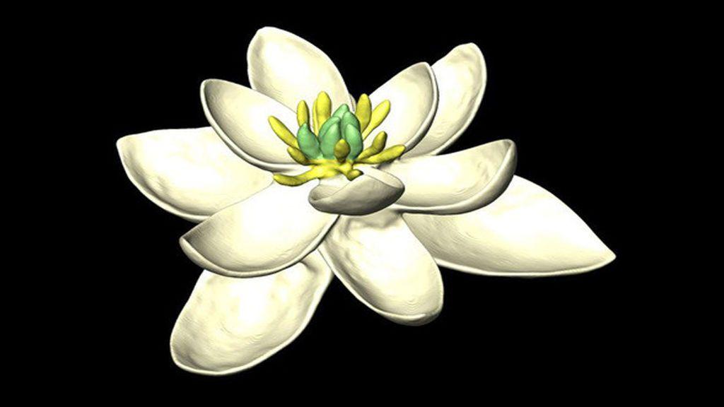 Bisexual y  parecida al nenúfar: así era la primera flor de la Tierra