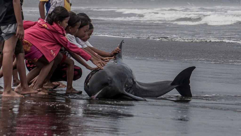Malas noticias: muere un delfín listado que quedó varado en la playa de Dénia