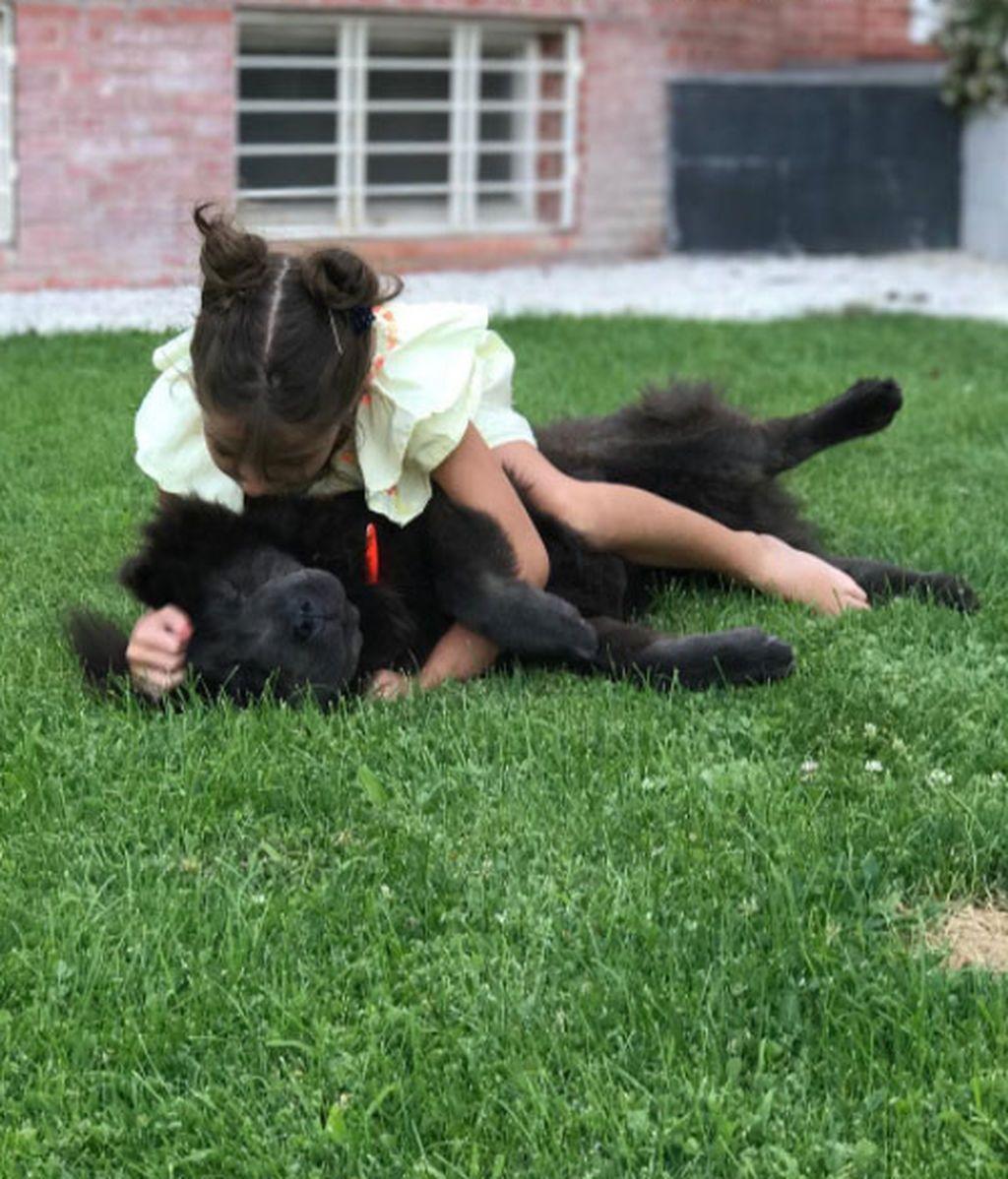 Los mejores amigos de los perros son los bebés: 'Vips' que lo demuestran en redes