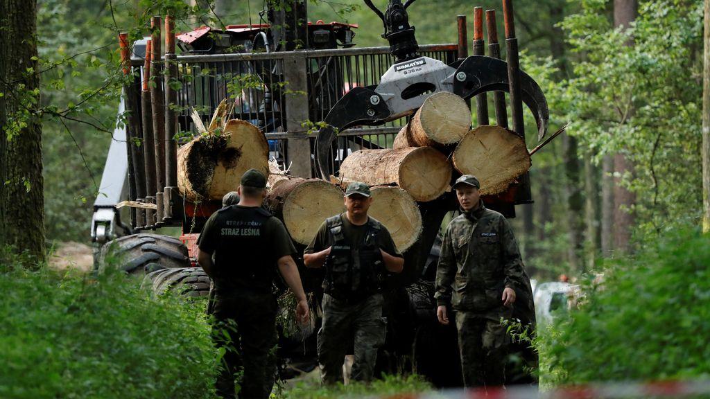 Polonia desafía a la UE y acaba con un bosque forestal protegido