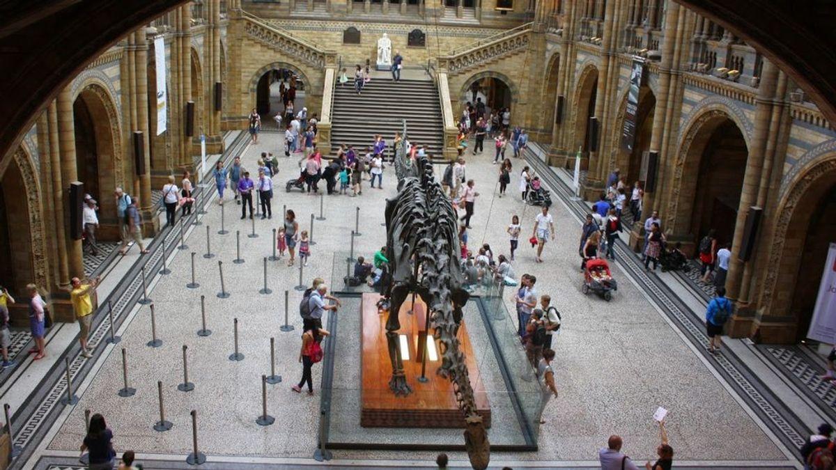 Un niño de diez años corrigió un error en el Museo de Historia Natural de Londres