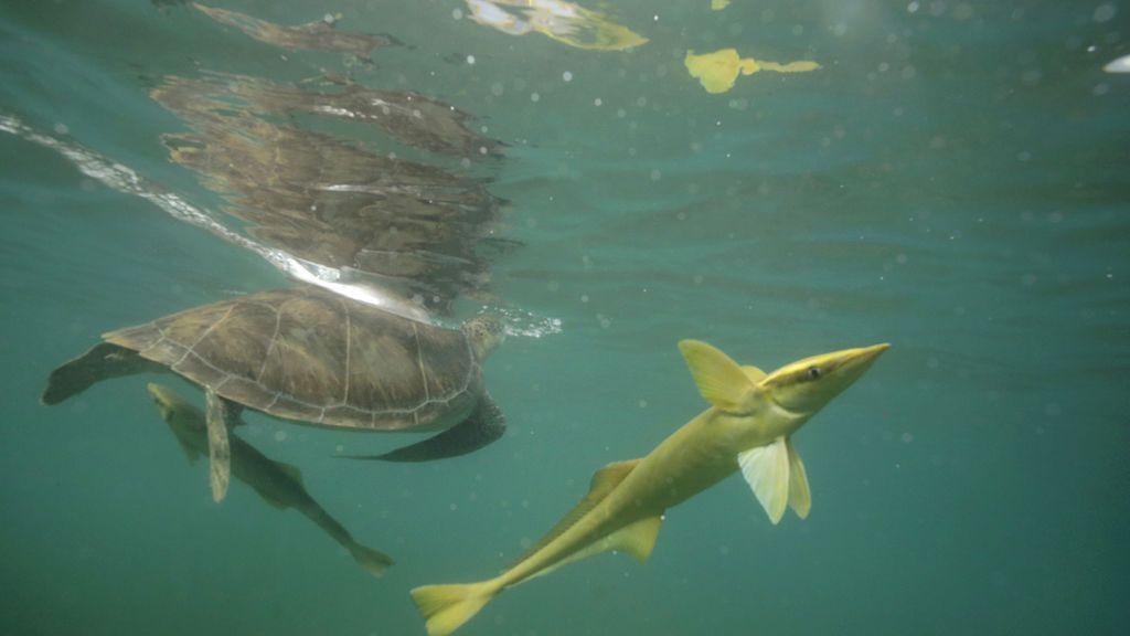 Tortugas en México