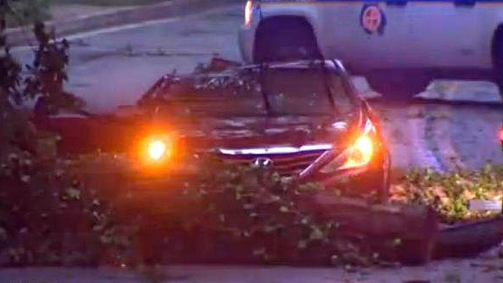Con 14 años fallece después de que un árbol cayese en el coche que viajaba