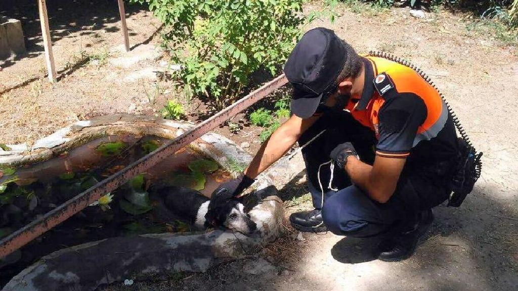 Salvan a un perro que se refugió en un estanque de Sevilla del calor asfixiante