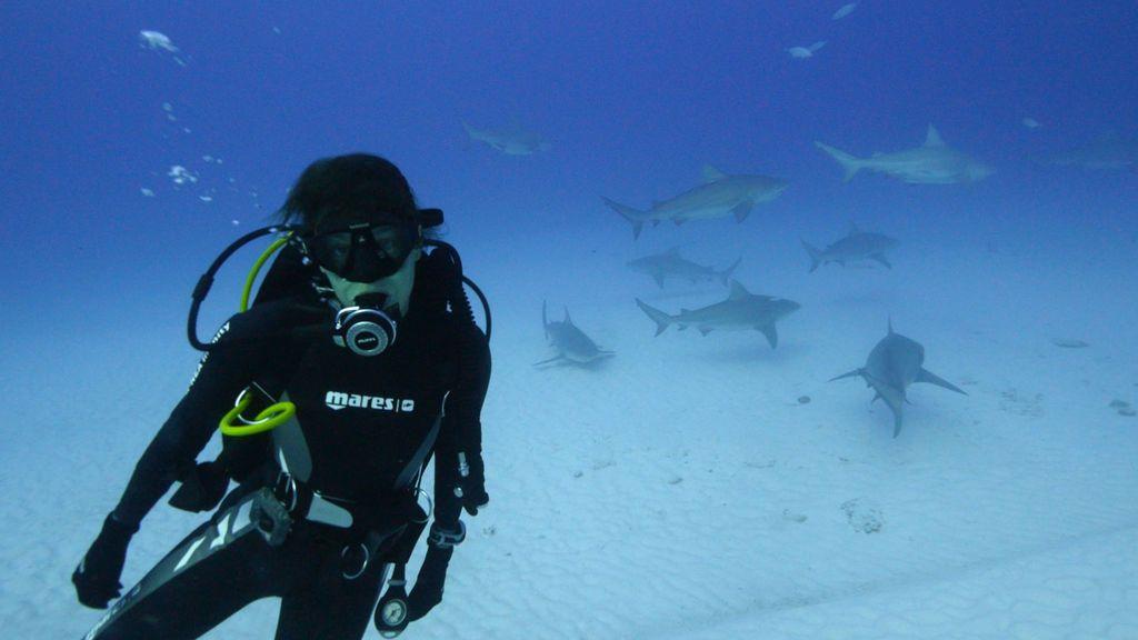 Entre tiburones toro