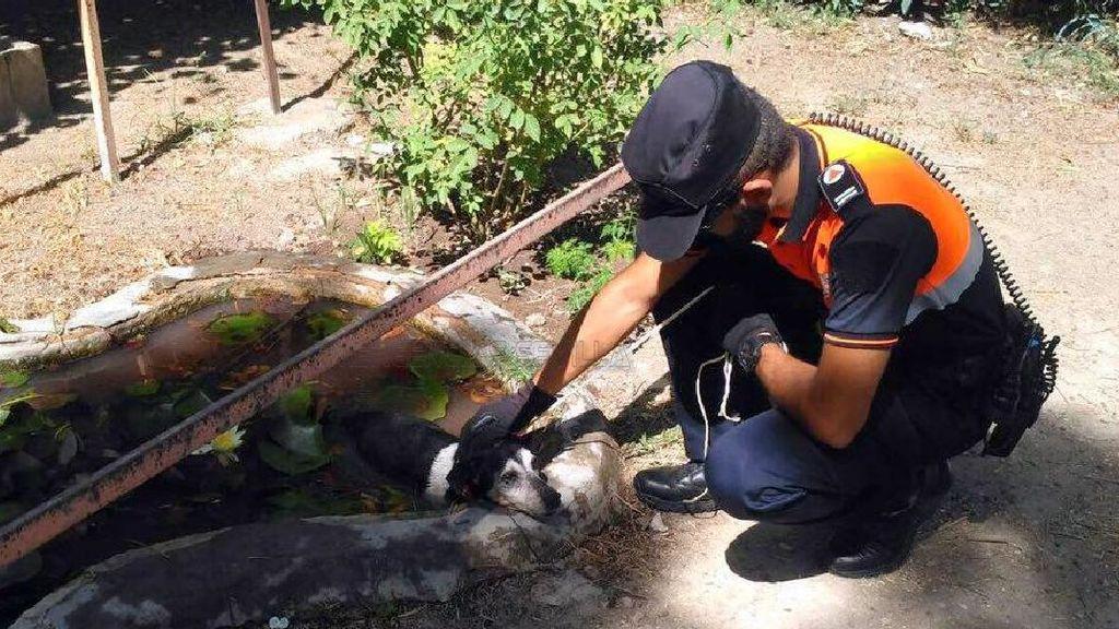 Rescatan a un perro que se refugi en un estanque de for Estanque para perros