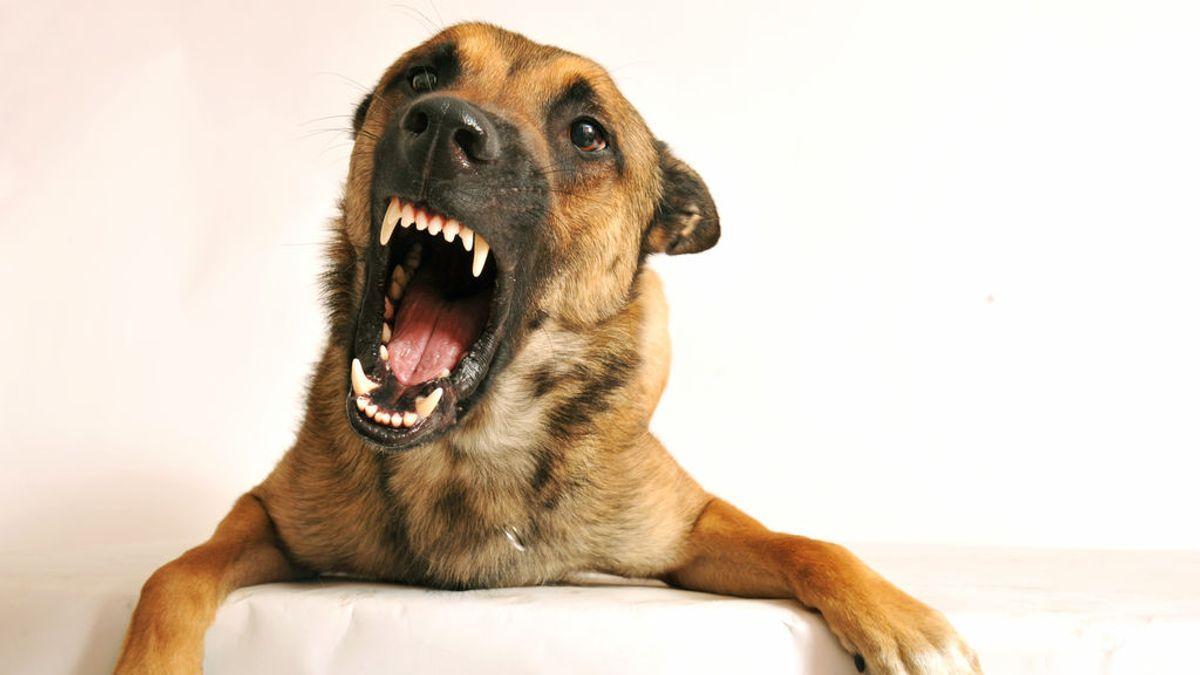 En contra de lo pensado, los perros no son capaces de oler el miedo