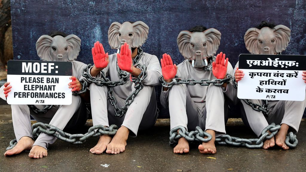 Protesta de PETA contra el uso de elefantes en actividades turísticas