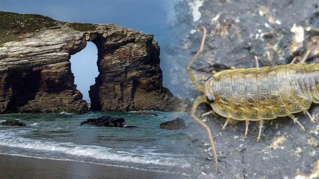 ¿Te pueden morder los 'piojos de mar' en España? Hablamos con expertos