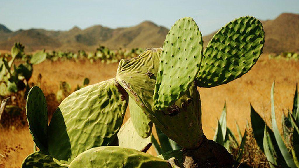 EL TIEMPO HOY - Flickr desierto Tabernas Almería