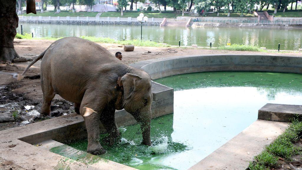 Día Muncial del Elefante