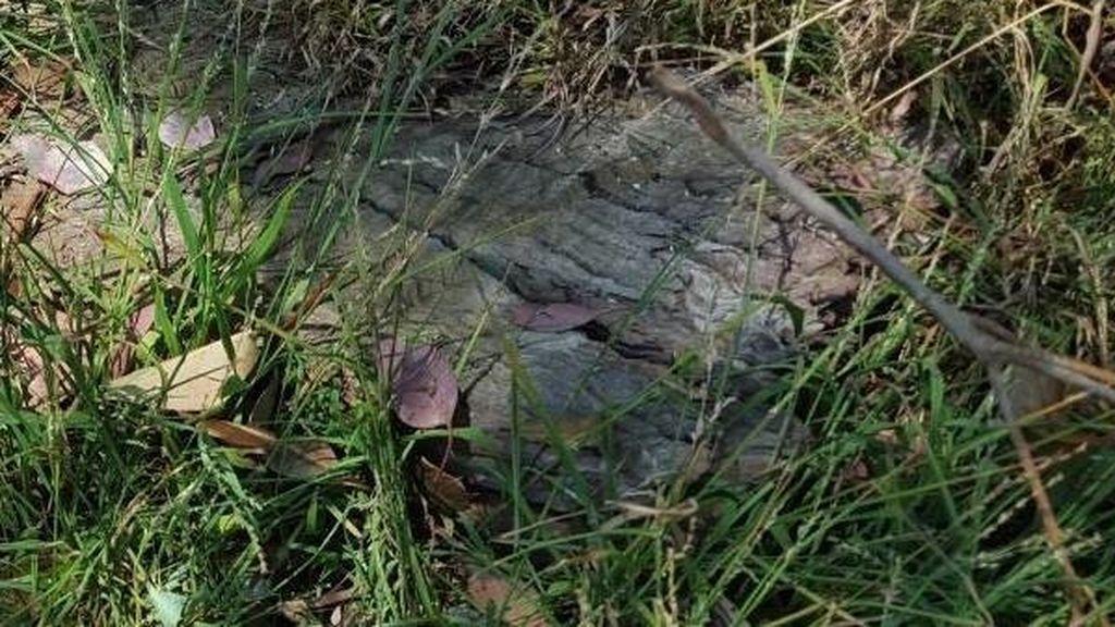 Esta una de las serpientes más mortíferas del mundo y sabe como camuflarse