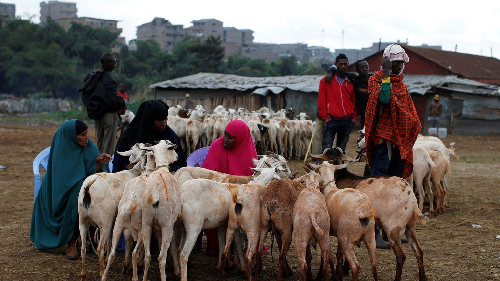El mercado de Kenia: ¡Aquí las cabras!