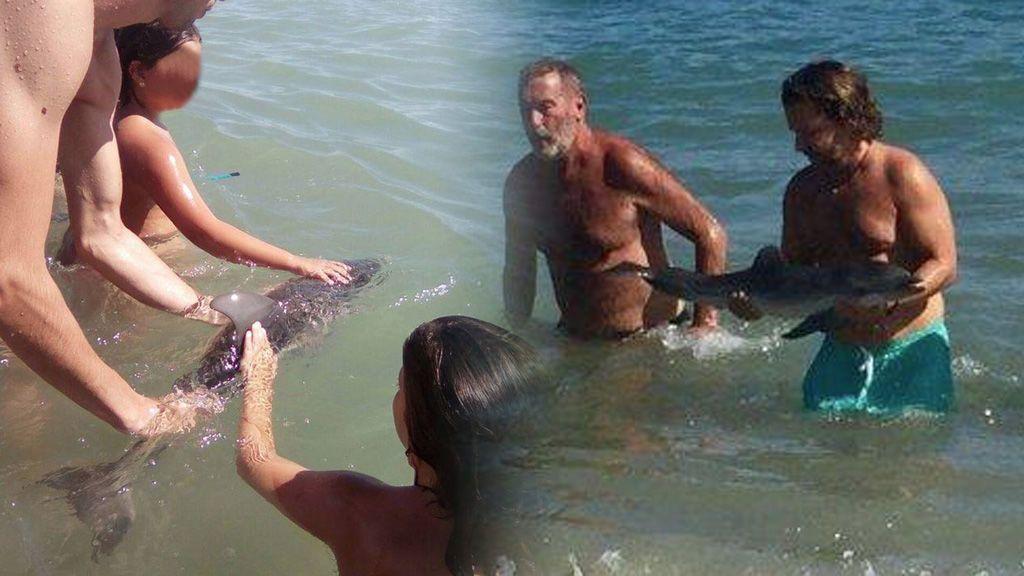 Muere una cría de delfín en Almería tras ser acosada por los bañistas