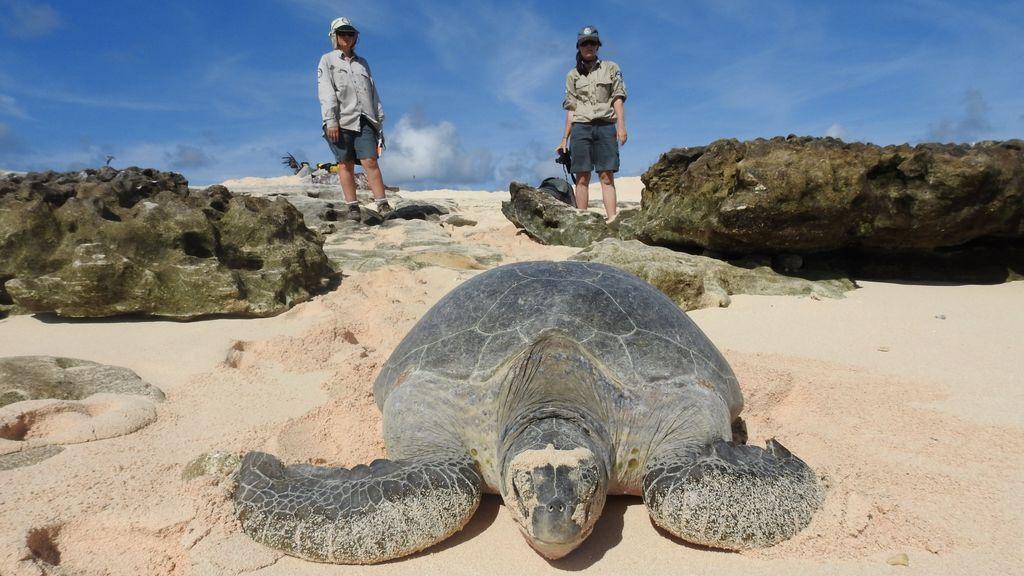 Rehabilitación de tortugas marinas amenazadas en Raine Island frente a la costa de Queensland