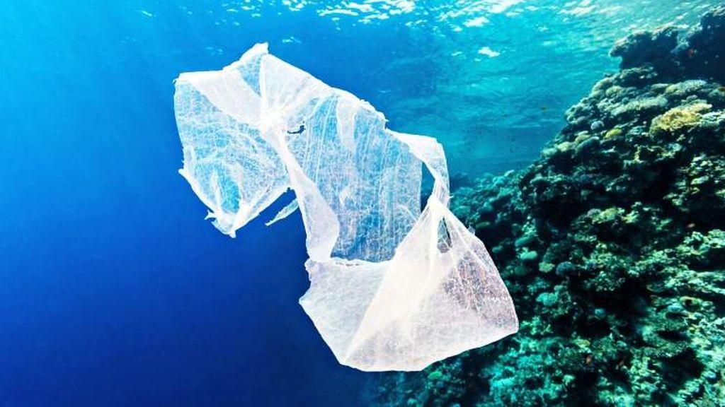 La razón por la que los peces se comen el plástico  tiene que ver con el olor