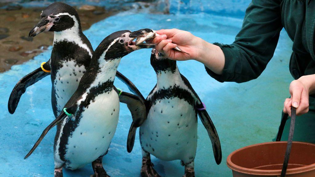 Chile cancela un proyecto minero multimillonario para proteger a los pingüinos