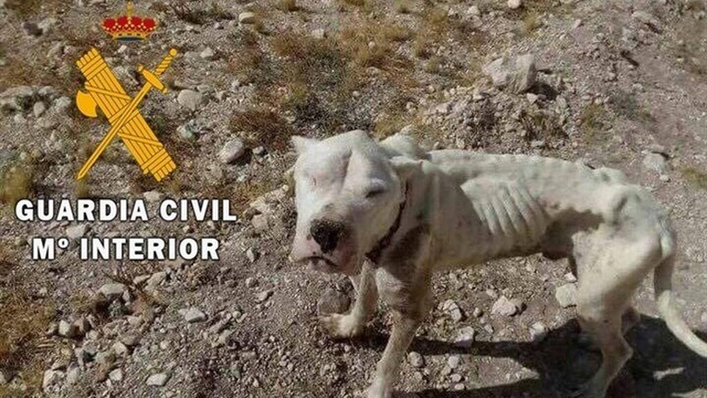 Rescatan en Almería  a un cachorro desnutrido al que le arrancaron el chip