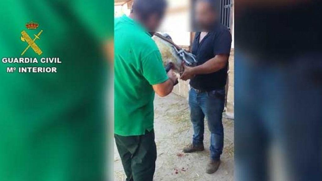 Cincuenta investigados en Málaga por maltrato y abandono de 316 animales domésticos