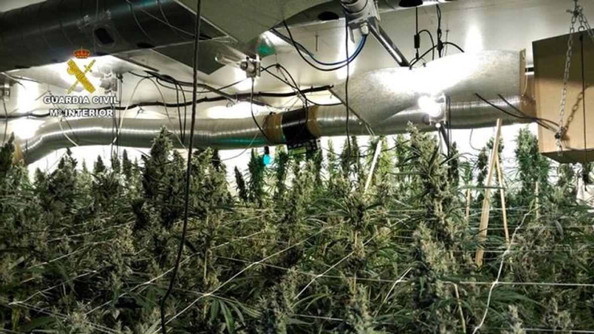 Contaban con un hilo musical para mantener a más de 1.300 plantas de marihuana