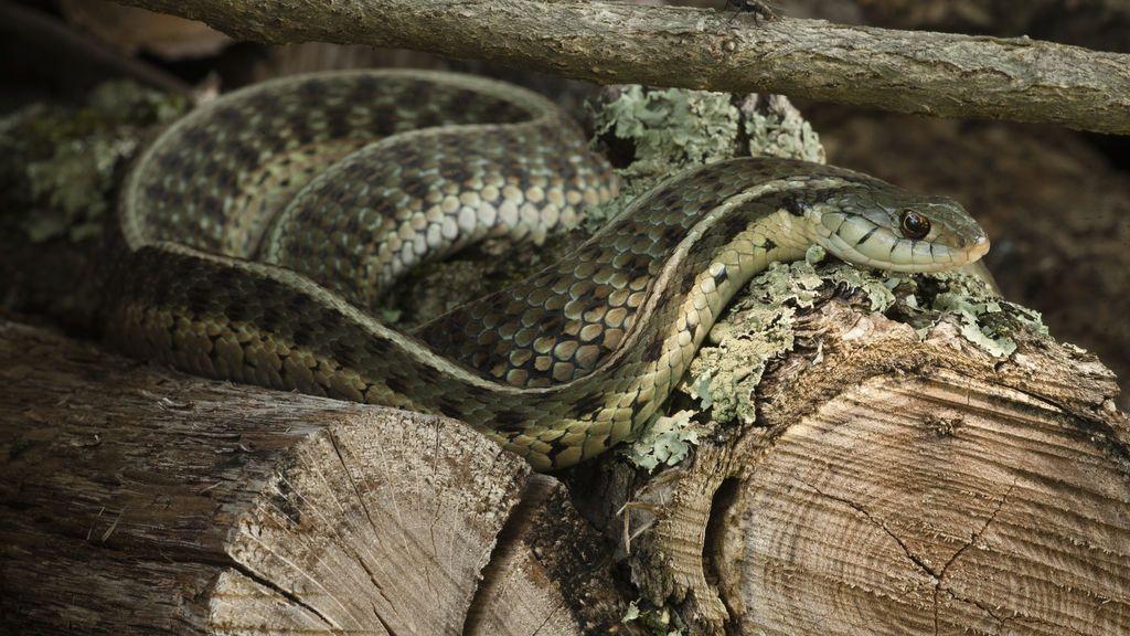 ¿Eres capaz de ver la serpiente escondida en esta imagen?