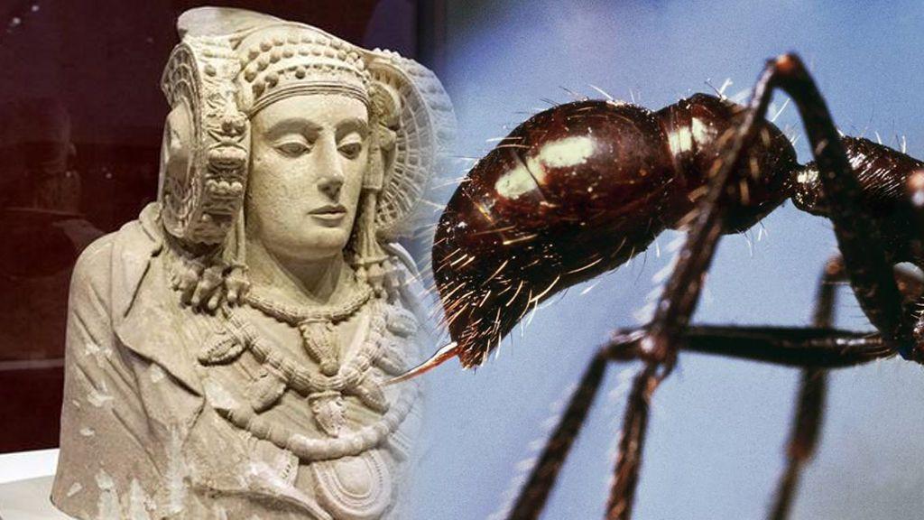 Como lo lees: una hormiga se pasea por la vitrina de la Dama de Elche