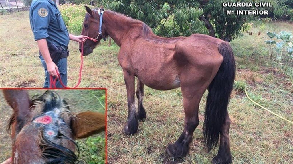 Investigado el propietario de una yegua por maltrato animal