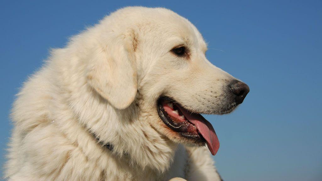 Un juez ordena cortar las cuerdas de unos perros después de que los vecinos se quejaran de los ladridos