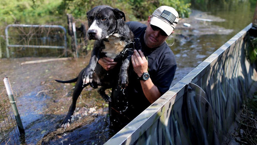 Rescate 'in extremis' a un perro en plena tormenta tropical Harvey