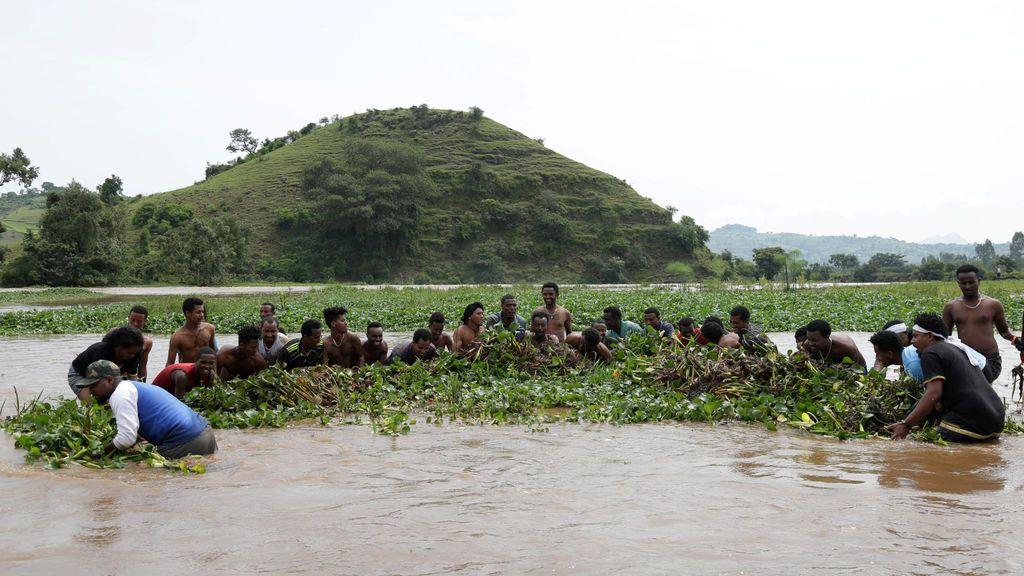 Hombres remueven manualmente jacintos acuáticos de agua dulce en el río Tana