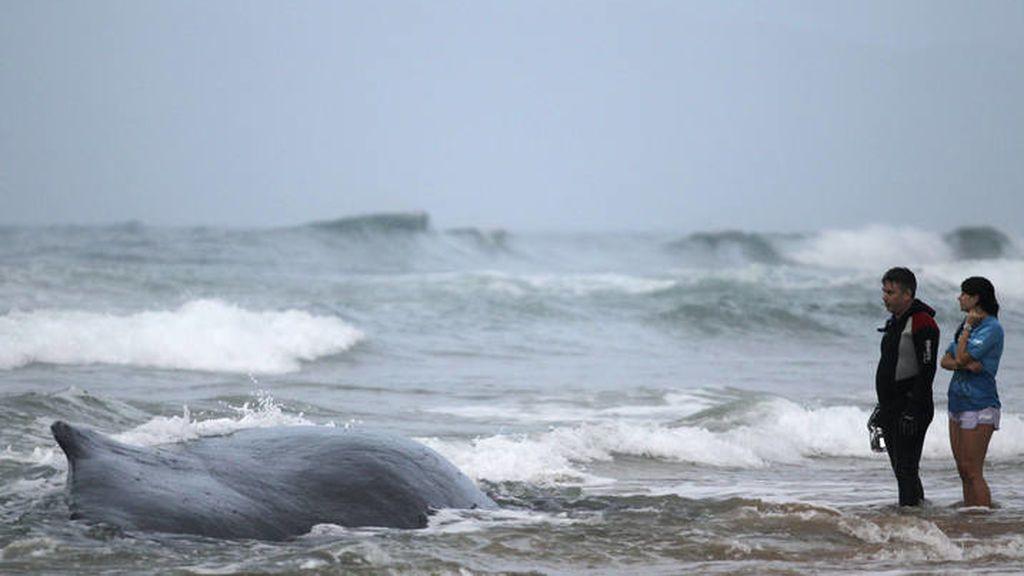La NASA descubre la causa de las muertes de las ballenas y cachalotes varados