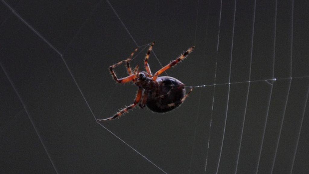 Un padre en estado ebrio le mete una araña en la boca a su hijo y después le propina una paliza